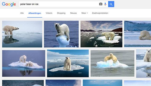 afbeeldingen zoeken polar bear