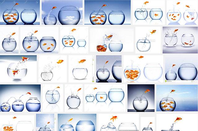 afbeeldingen-zoeken-website-overgebruik-stockfoto-goudvis