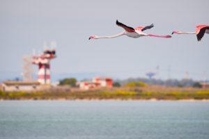flamingo's luchthaven