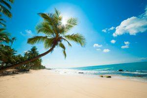 Sri Lanka strand palmboom
